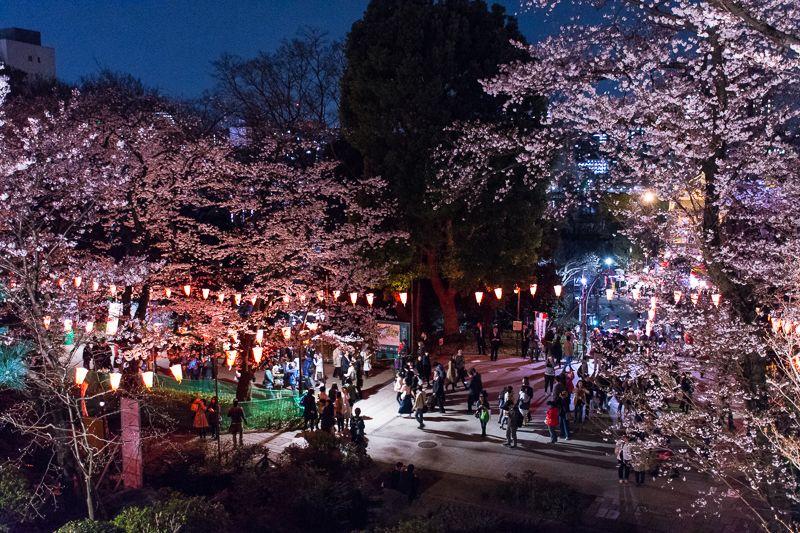 「清水観音堂」と夜桜