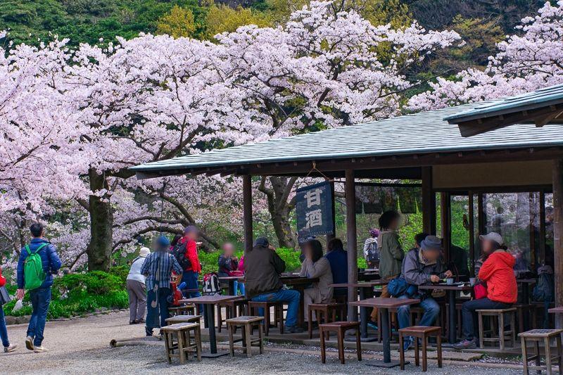 三渓園は広い!桜を見ながら一休み