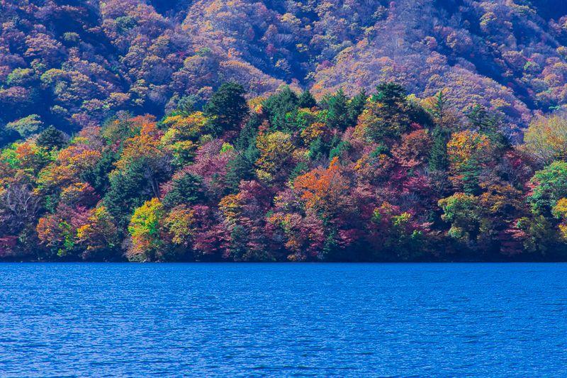 八丁出島の紅葉は様々な角度から楽しめる!