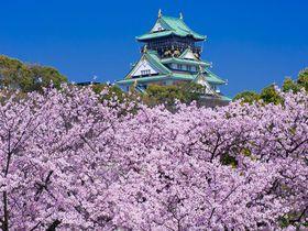 「大阪城」は桜の名所!ライトアップも美しい関西有数の花見スポット!