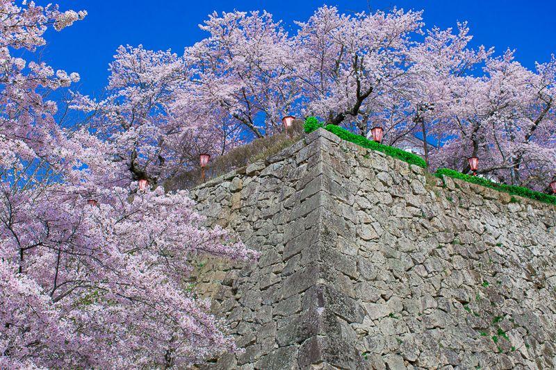 津山城の桜鑑賞ポイント