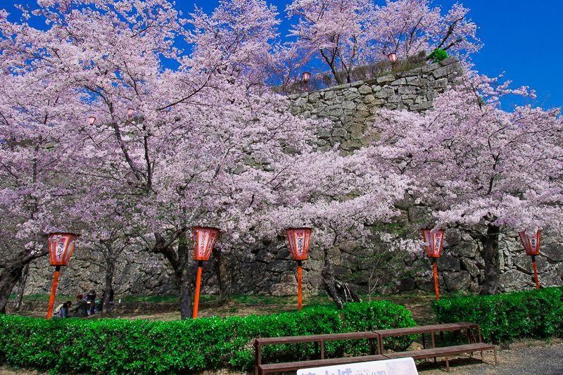 岡山県屈指の桜名所「津山城」