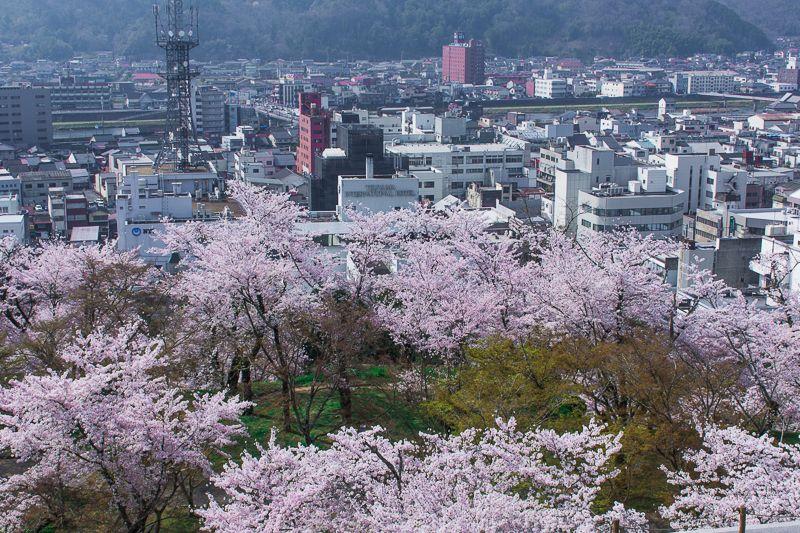 津山城から見下ろす桜絶景!