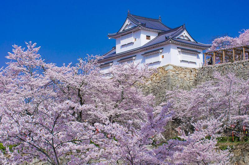 津山城のシンボル「備中櫓」と桜