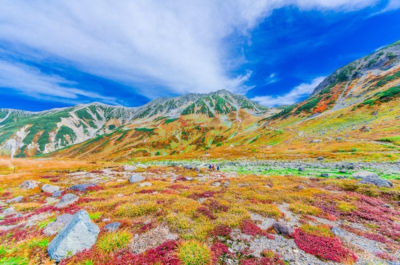 立山・室堂で見られる紅葉