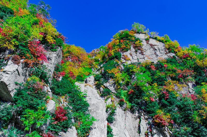 「大観峰駅」から望むタンボ平と紅葉