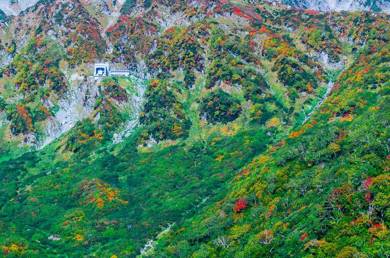 立山黒部アルペンルート「タンボ平」の紅葉が凄い!