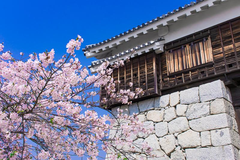 天守だけじゃない!松山城と桜の様々な鑑賞ポイント