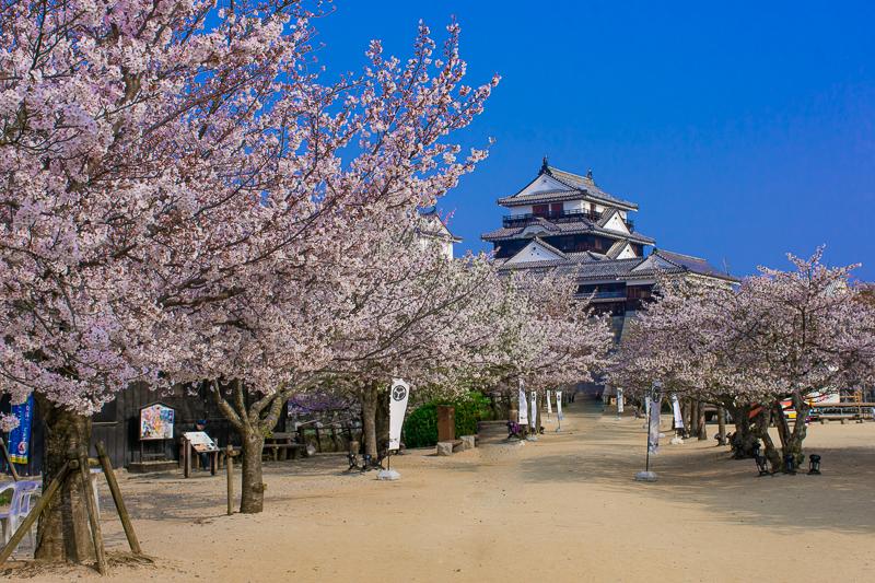 松山城は桜の名所