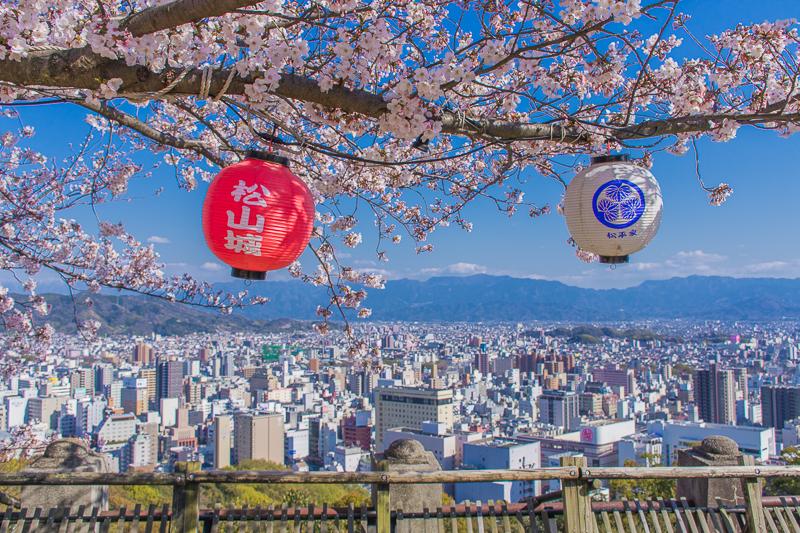 他にもいろいろ!松山城と桜の楽しみ方