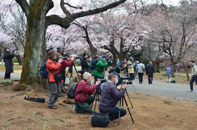 外国人観光客の関心は日本の日常風景にも