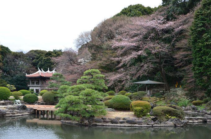 国際色ゆたかな庭園を多数所有する新宿御苑