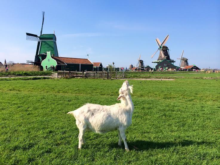 1.オランダってどんなところ?