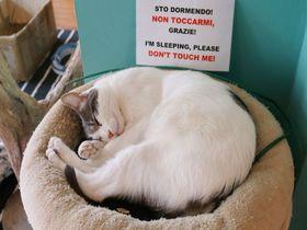 イタリア・ミラノの猫カフェ!!「クレイジーキャットカフェ」