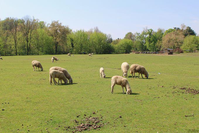 園内には、あらゆる動物が暮らす牧場まで!