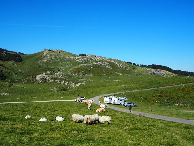 馬・牛・羊が自由に過ごすパラダイス