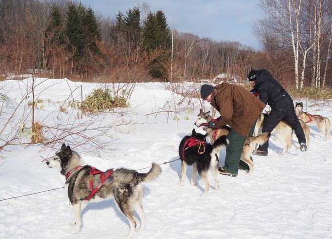 犬そりの準備をし雪原へ出発!