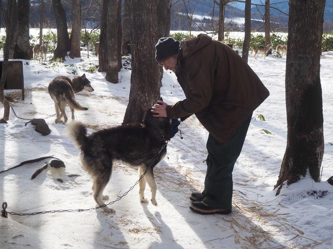 犬そりの基本を学び、そり犬と対面!