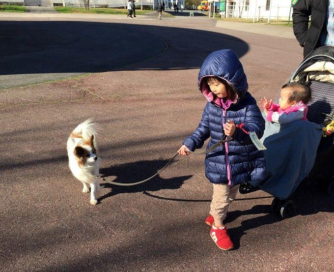 レンタル犬でお散歩体験!