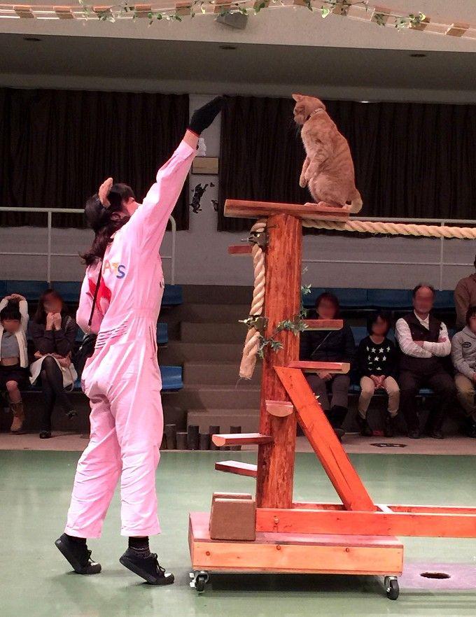 猫だって「芸」ができるんです!