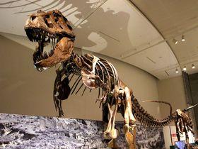 ココがスゴイ!群馬県立自然史博物館へ行くべき6つの理由