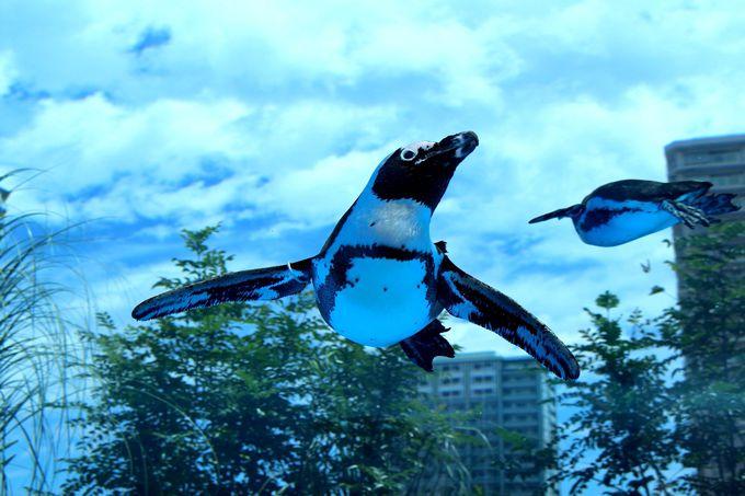 コンパクトだけど工夫がいっぱい!東京都内の「水族館」