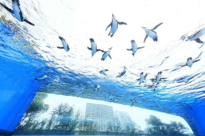 8.サンシャイン水族館