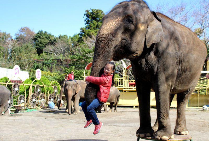 象だけじゃないゾウ!千葉「市原ぞうの国」でエサやり&触れ合い体験