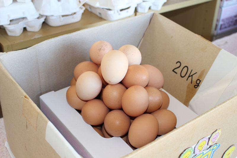 千葉「ポッポの丘」で新鮮卵の詰め放題に挑戦!食堂車でT.K.Gも食べられる!?