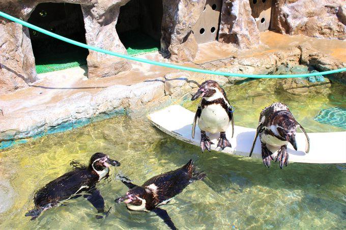 ペンギンがお出迎え「絶景の宿 犬吠埼ホテル」