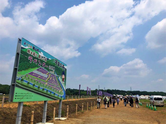 日本最大級の広さ!千年の苑ラベンダー園
