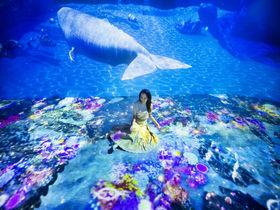 横浜に竜宮城!?「OCEAN BY NAKED 光の深海展」日本初上陸