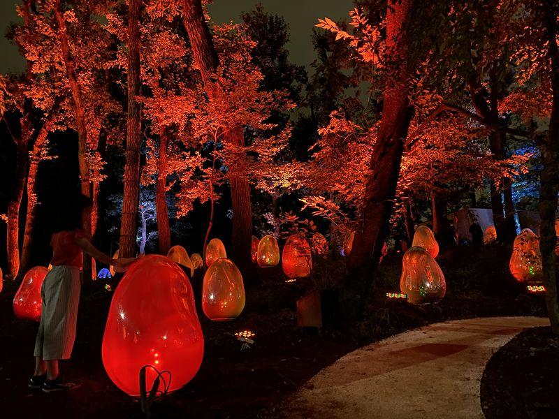 埼玉・所沢に常設展示「チームラボ どんぐりの森の呼応する生命」