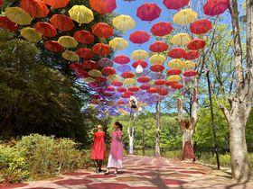 ムーミンバレーパークに広がる傘の空「ムーミン谷とアンブレラ」