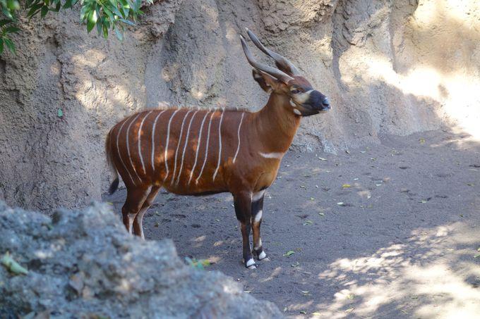珍しい動物や珍しい光景に驚嘆!