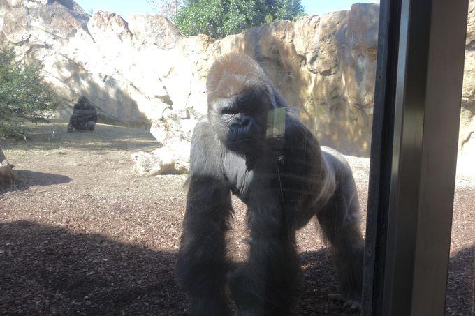 スケールの大きさと動物との近さが迫力満点!