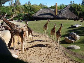 子連れマスト!バレンシア「ビオパルク」は欧州で大人気の動物園