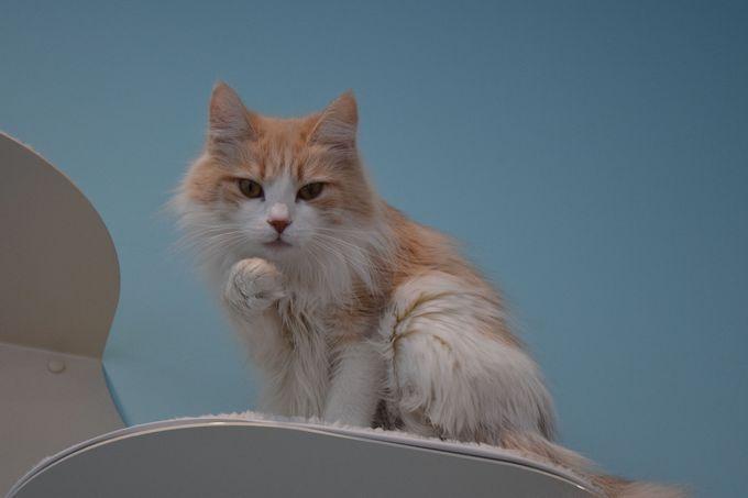 やっぱり癒し系カフェに猫ちゃんは外せない?