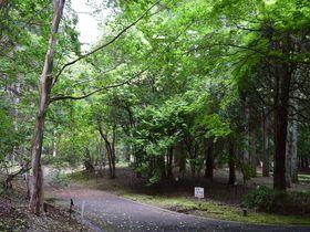 茨城県・森林総合研究所「もりの展示ルーム」が期間限定公開!