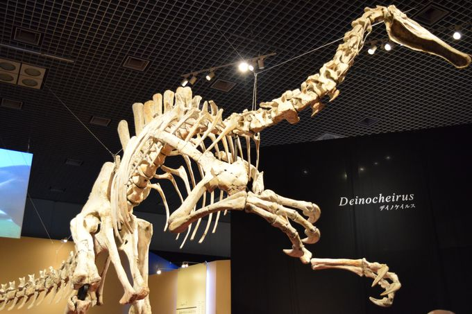 世界初公開!2.4mの長い腕を持つ謎の恐竜デイノケイルス