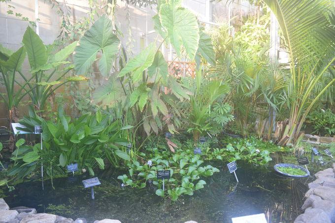 水草やアクアリウムに癒される「水生植物温室」
