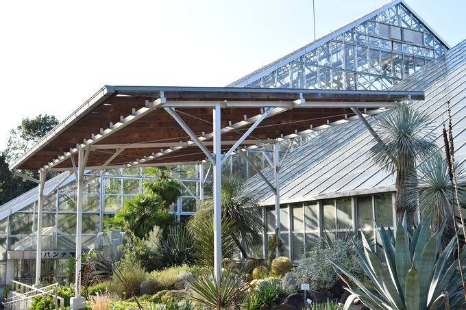 身近な植物から珍しい植物まで楽しめるボタニカルガーデン