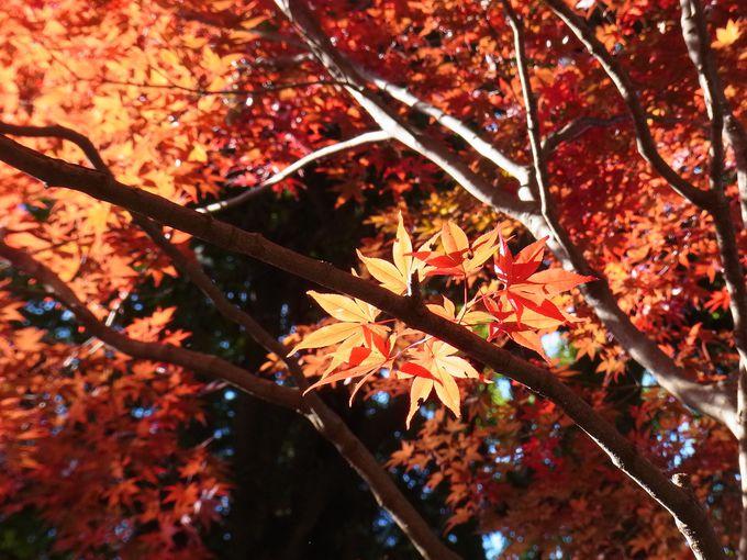 古刹・平林寺で紅葉狩り!おやつも忘れずに。