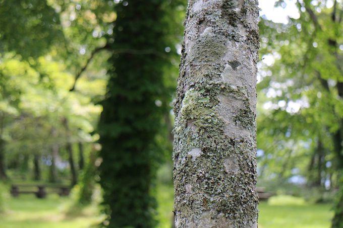 支笏の森は、貴重な「極相林」です!