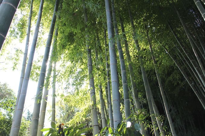 竹林のなかで自分に還る