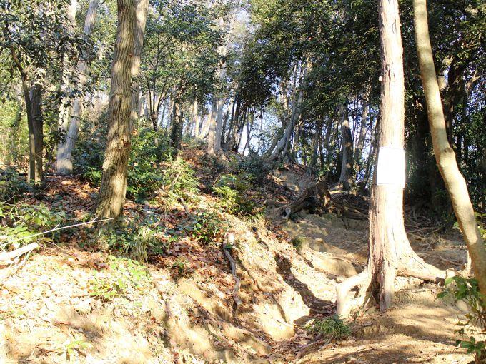 八幡神社脇の登り口からスタート!