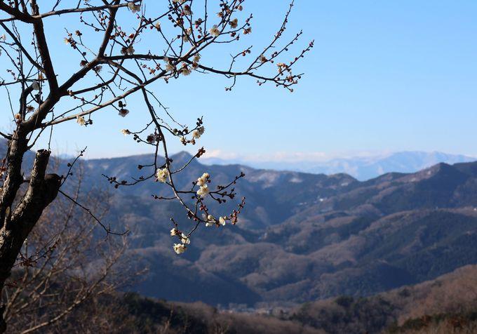 鐘撞堂山の山頂からの眺めは絶景!