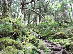 八ヶ岳をのぞむ苔の森をトレッキング!長野・白駒の池