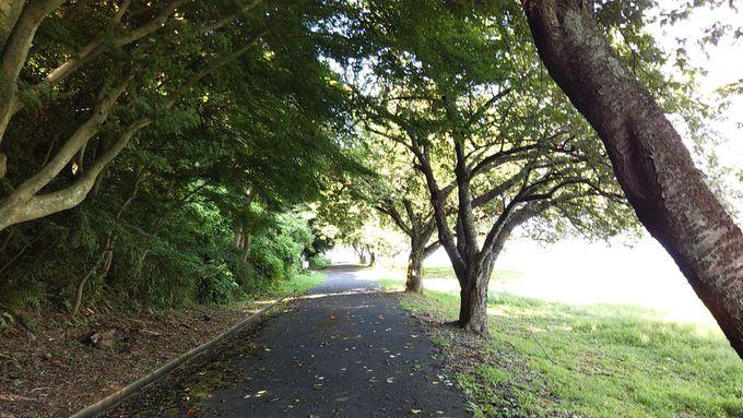 子供の遊びゾーン・青島の周囲は遊歩道!春は桜が美しい