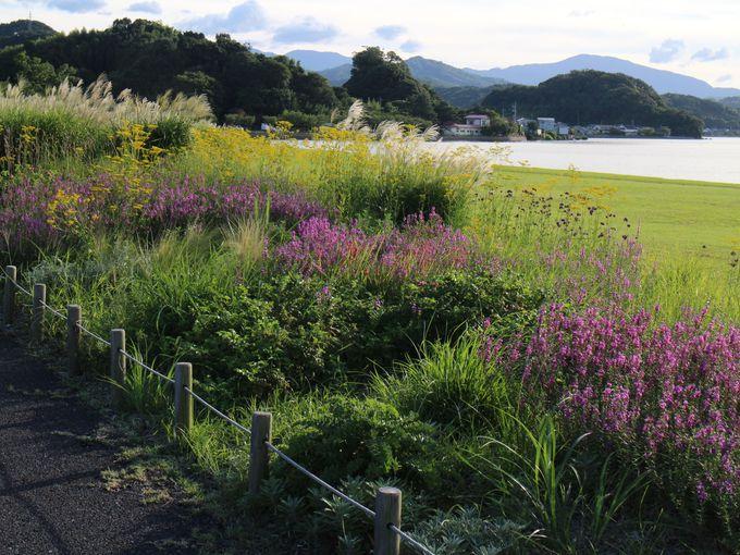 四季の花々が楽しめる湖山池オアシスパーク